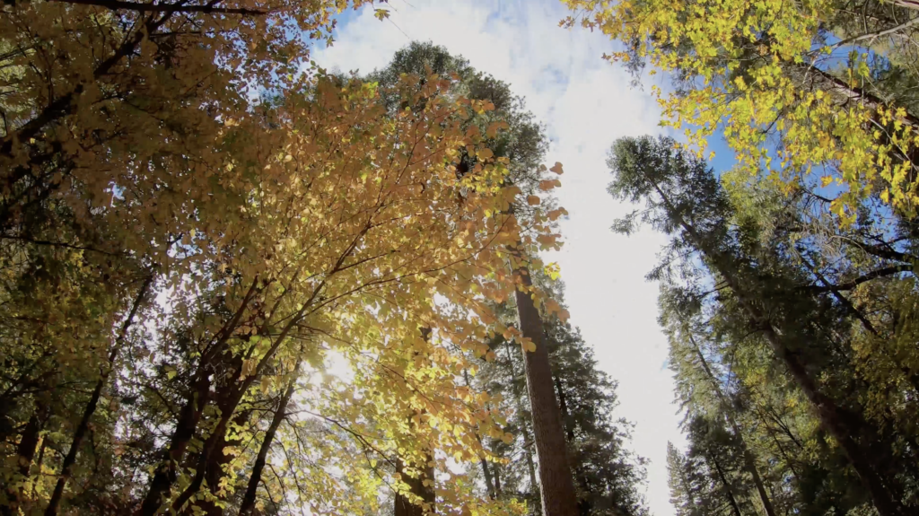 Couleurs d'automne à Yosemite