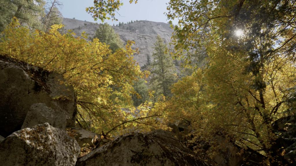 Couleurs d'automne dans le Parc de Yosemite