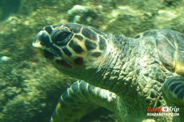 Gros plan sur une tortue marine