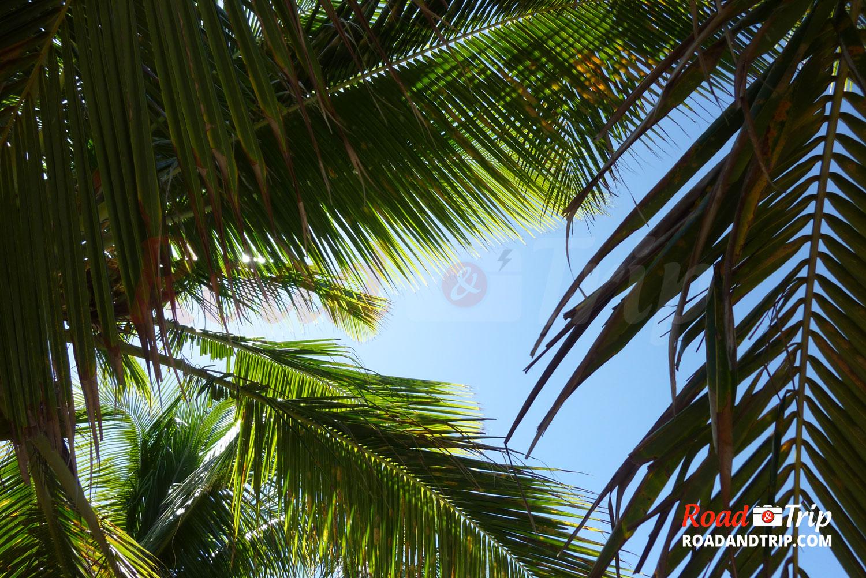5 choses à voir et à faire en Guadeloupe