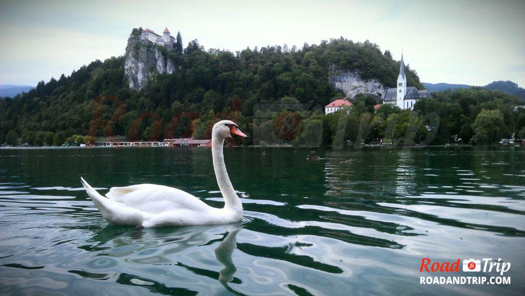 Lacs de Bled en Slovénie