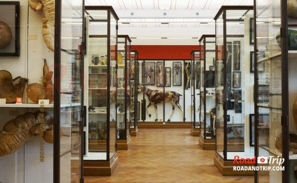 Le Musée d'histoire naturelle et le planétarium