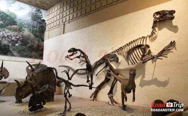 Le Muséum d'histoire naturelle Peabody