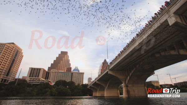 Les chauves souris de Austin