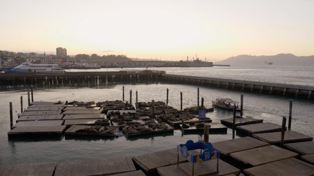Les phoques de Pier 39