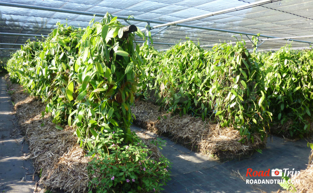 Les plantations Roulof