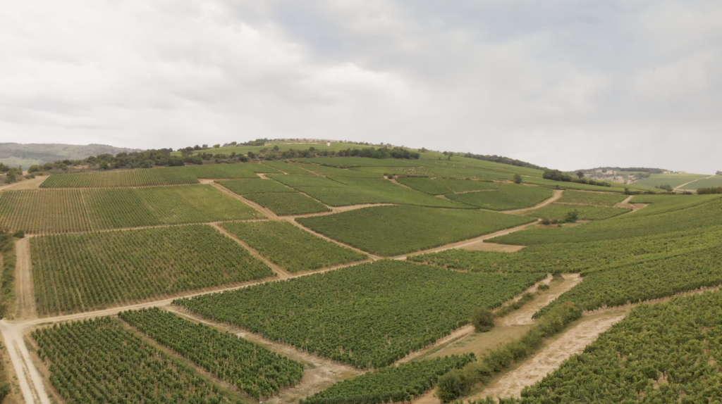 Les vignes aux environs de Cluny en Bourgogne