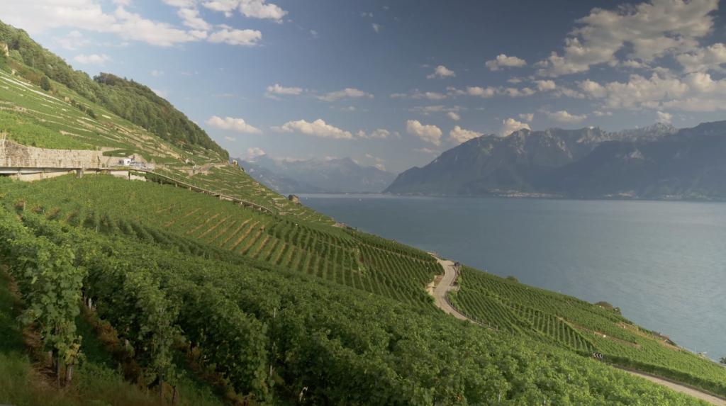 Les vignes du Lavaux