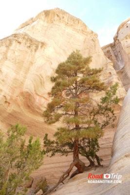 Paysage semi-désertique à Tent Rocks