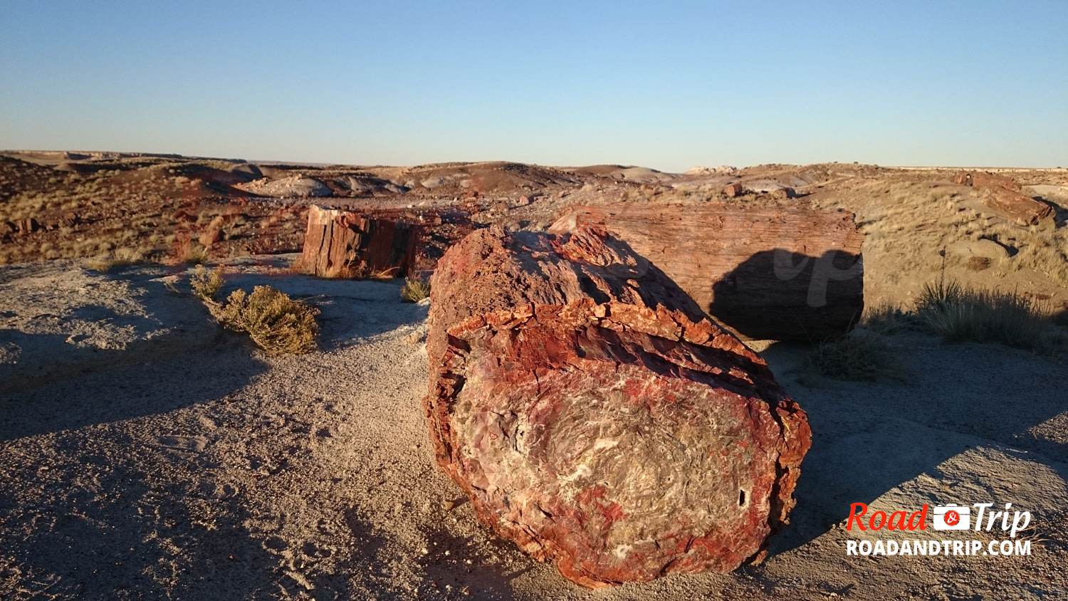Balade à Petrified Forest en Arizona