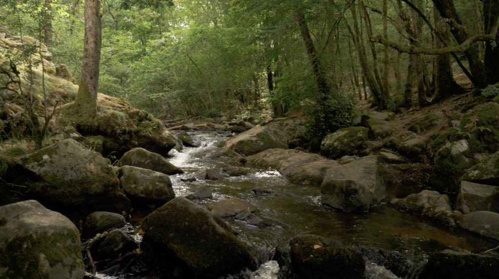 Rivière au Saut de Gouloux dans le Morvan