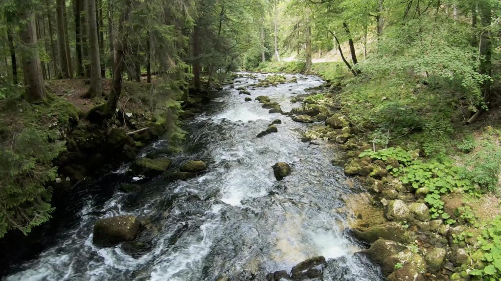 Rivière dans le Parc Jura Vaudois