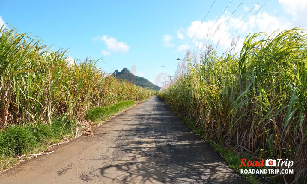 Routes de l'île Maurice