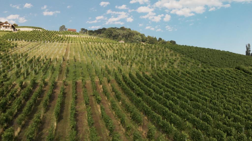 Vue aérienne sur le vignoble de Lavaux